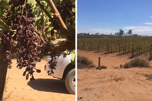 Photos of grape farm