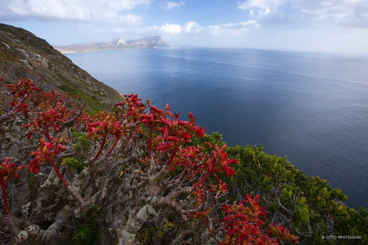 Photo of fynbos