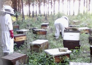 Photo of beekeeper