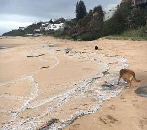 Photo of dog walking on polluted beach