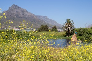 Photo of Table Mountain in the background of a field