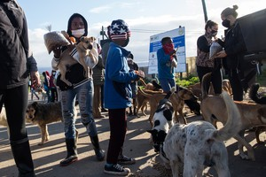 Animals in Plett Get Aid