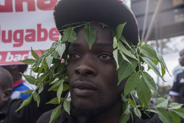 An anti-Mugabe protester adds some tree leaves to his hat as the protesters get ready to move to the State House.