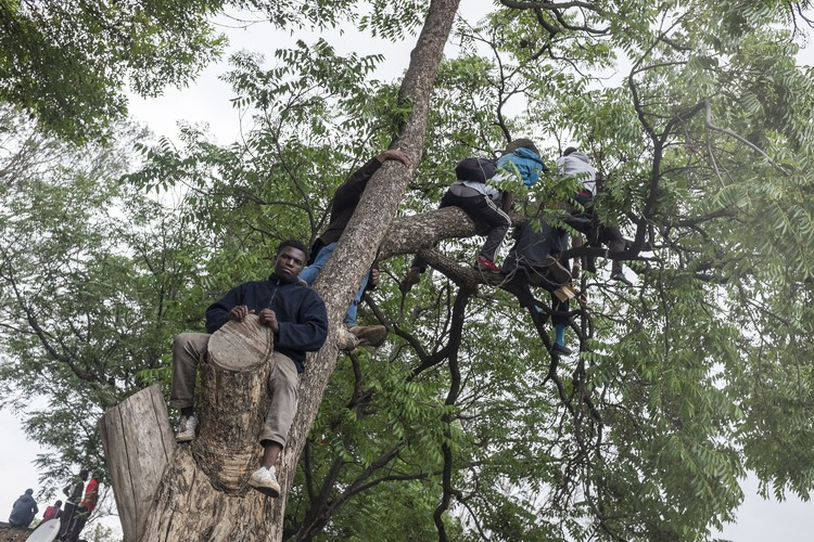 Some protesters decided to climb tree's to get a better view of the proceedings at the Zimbabwe Grounds.