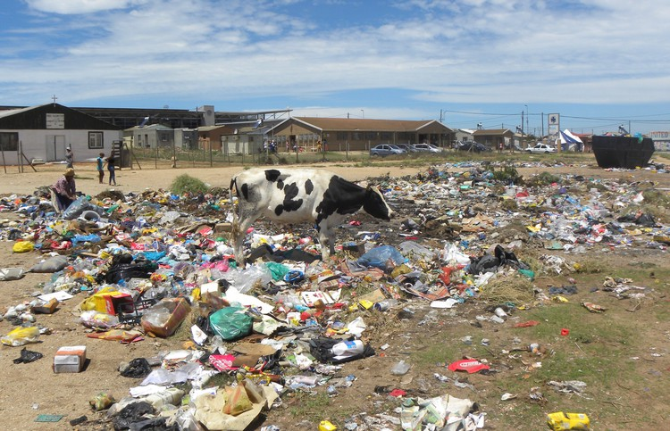 Photo of dumpsite with cow