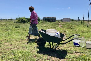 Photo of a woman and a wheelbarrow