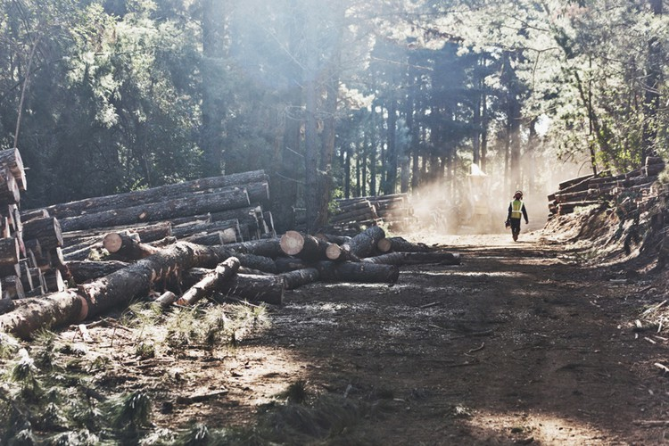 Photo of man in timber plantation