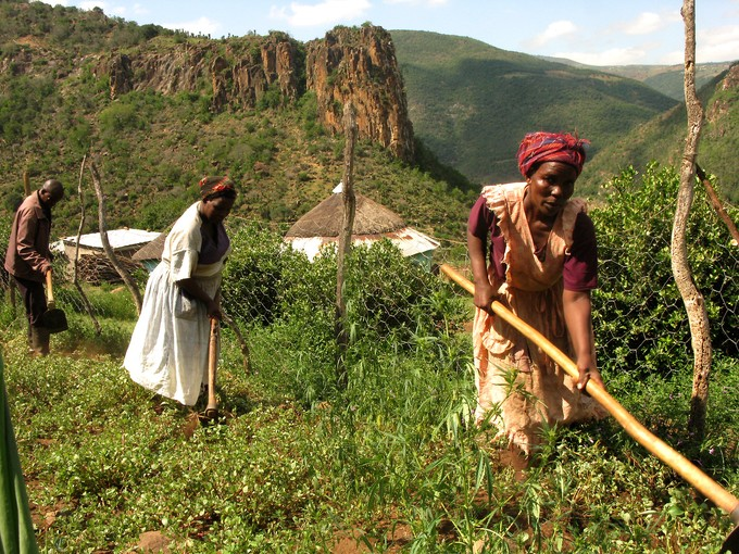 Photo of women tilling dagga