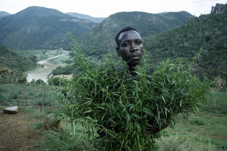 Photo of man carrying dagga plant