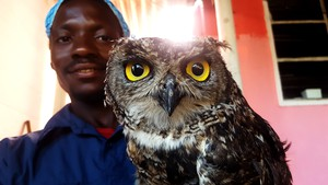 Photo of man with owl