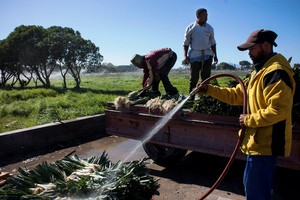 Photo of farmworkers