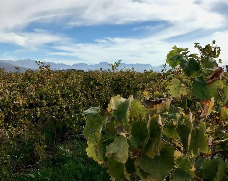 18,000 jobs lost in wine industry – Vinpro
