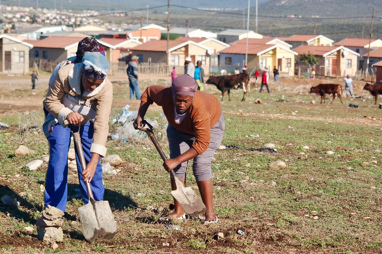 Photo of two people digging