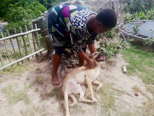 Photo of a woman playing with a dog