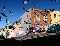 Birds over Bo-Kaap on a sunny winter's day. Photo by Masixole Feni.