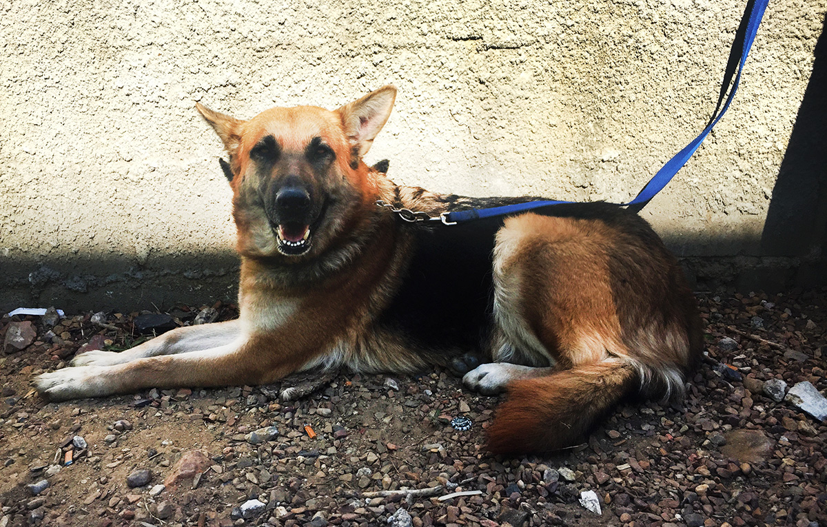 Dog Friendly Property To Rent Near Roadwater