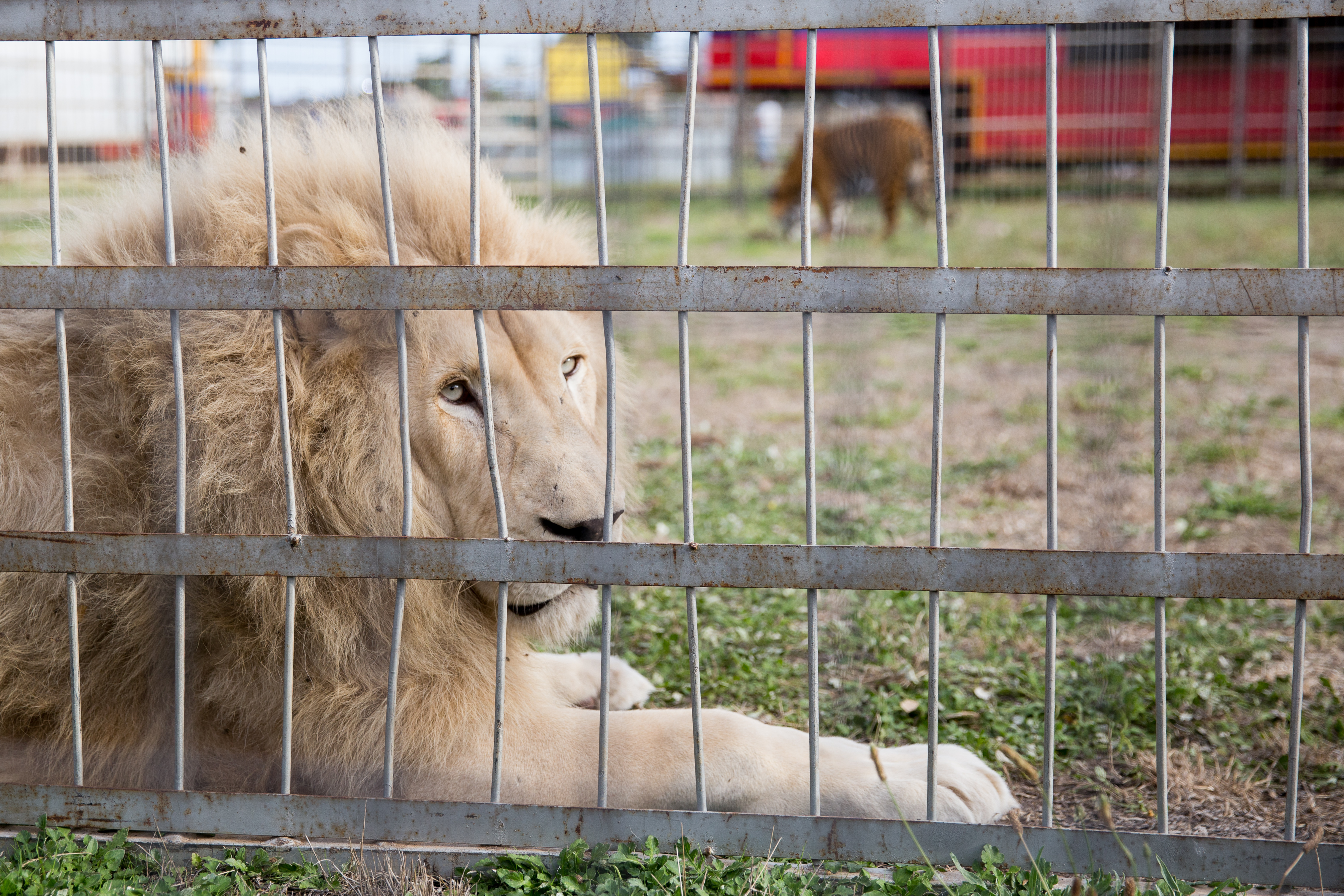 Circus animals: part of a magical world, or the victims of