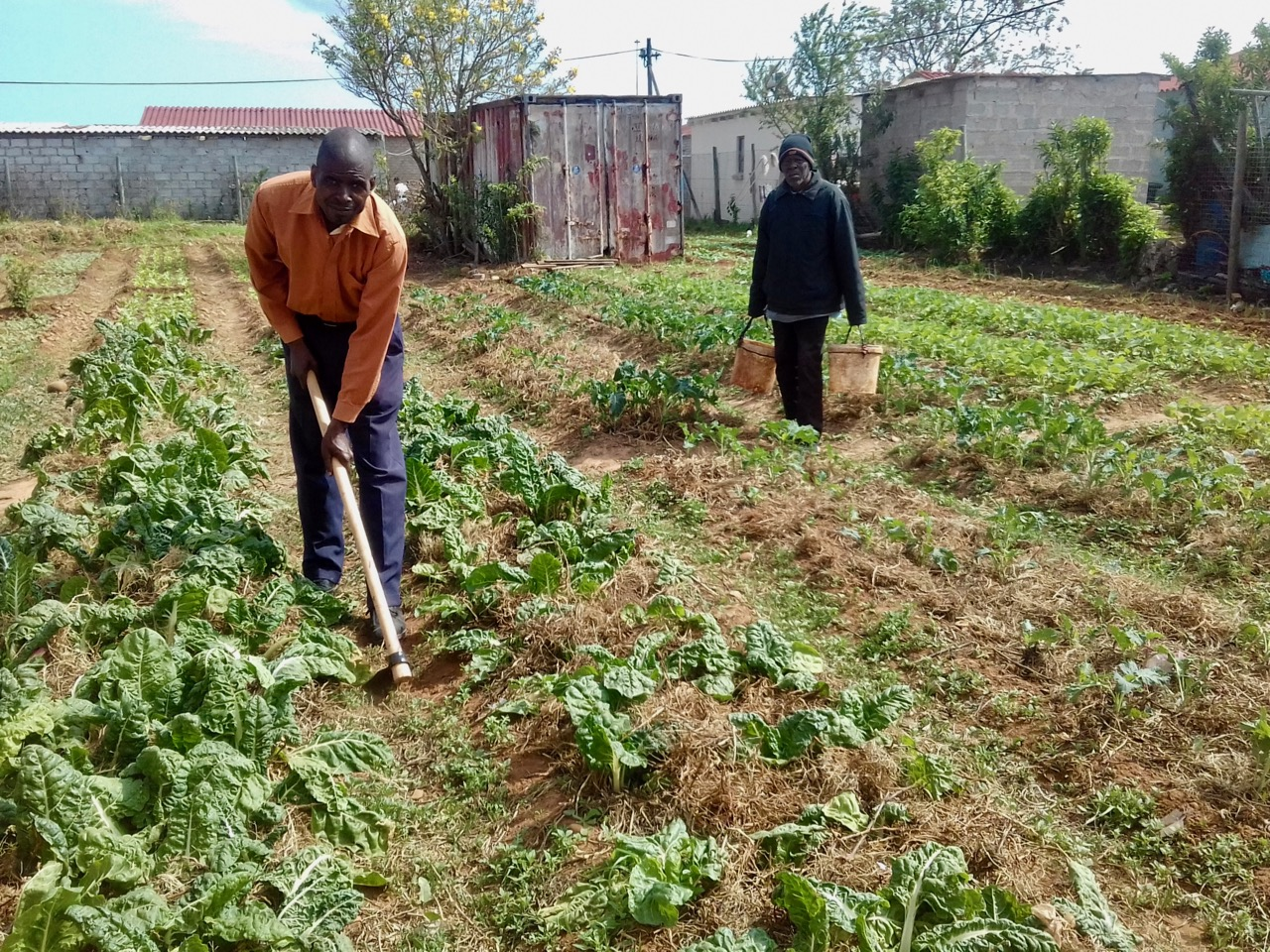 backyard veggie gardens put food on the table groundup