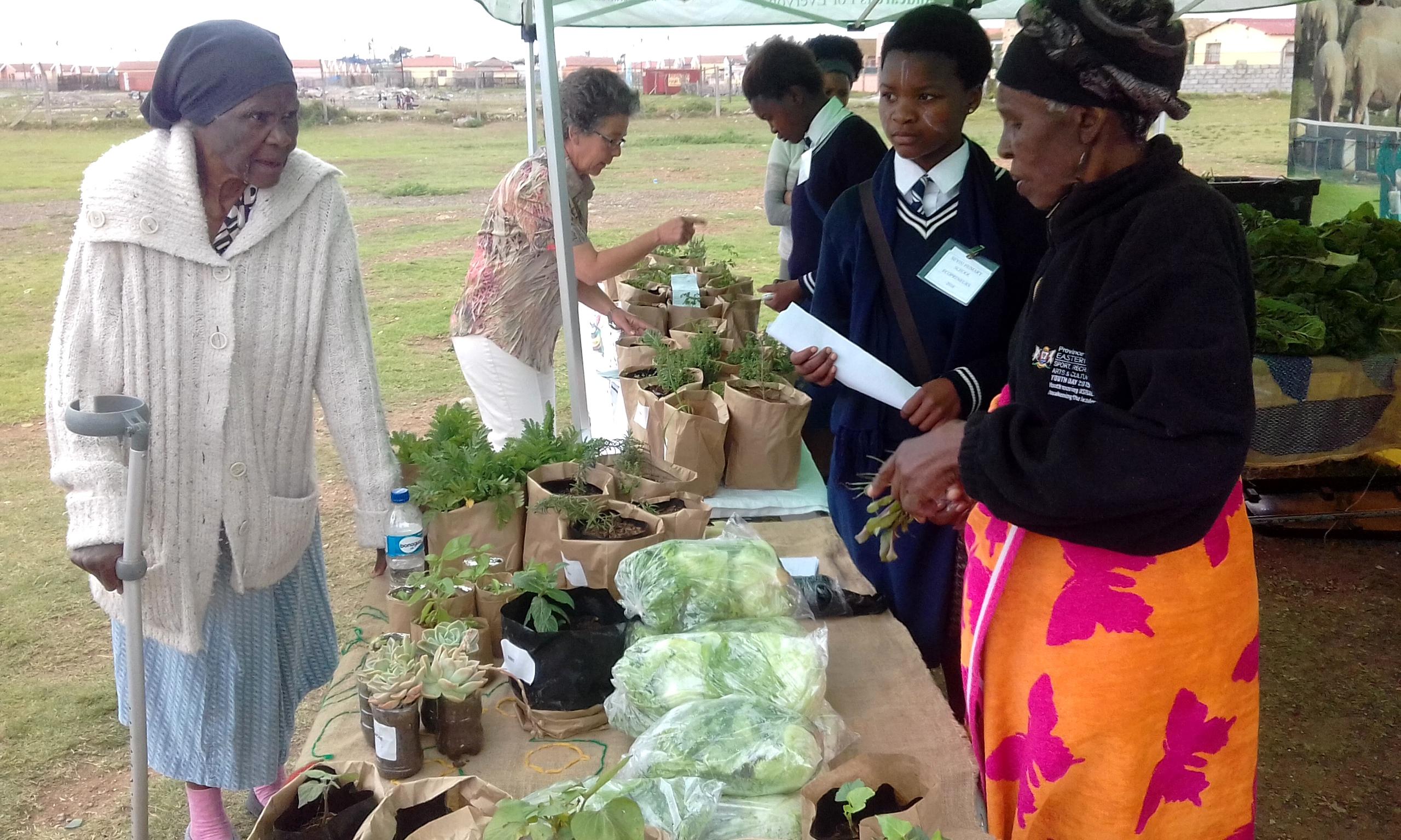 School vegetable gardens - Photo Of A Vegetable Market